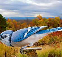 Blue Jay Ready for Take-Off by Bonnie T.  Barry