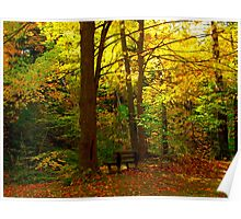 A bench amongst leaves Poster