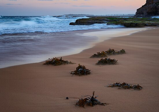 Windswept Turimetta by Ian English
