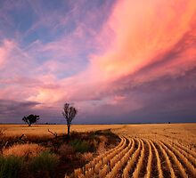 After the Harvest and Storm has gone by David Haworth