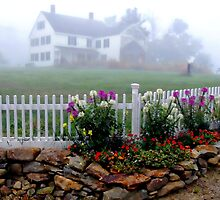 Garden in the Fog by smalletphotos