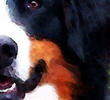 Bernese Mountain Dog - Half Face by Sharon Cummings