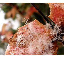 Snow Flakes Photographic Print