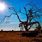 In the Desert, California USA by Jessica Karran