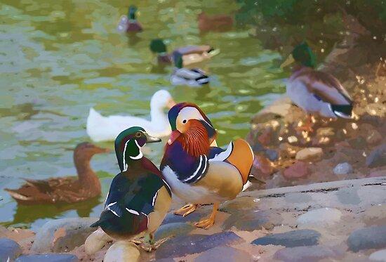 Mandarin Ducks by Aase