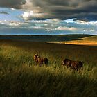 Brothers - Masai Mara Kenya by Pascal Lee