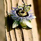 Extraordinary Flower by lechnera09