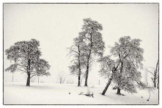 Winter Pines by KBritt
