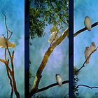 Corellas at Hepburn Srings  by Chris Armytage