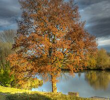 autumn tree by Nicole W.