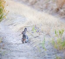 Bunny Trail by Kim Barton
