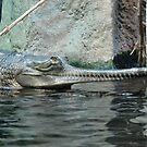 View crocodiles - always on the alert by Eva Novkov