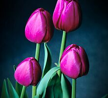 Tulips by Malcolm Garth