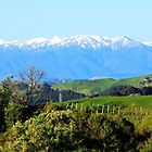 """The Western Ruahines, New Zealand"" by Rosehaven"