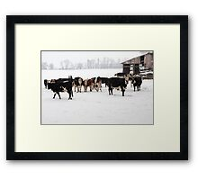 Cattle on a Snowy Day Framed Print
