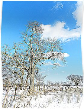 January Blue by TrendleEllwood