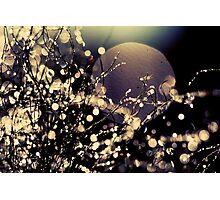 Moonrise in Fairyland Photographic Print