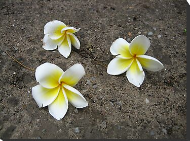 Fallen Thai Blooms by Mary-Elizabeth Kadlub