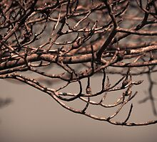 Dogwood branches in the winter  by KSKphotography