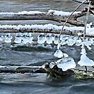 Ice Bells over Rock Creek, Twin Falls, Idaho, USA by Brenda Dahl