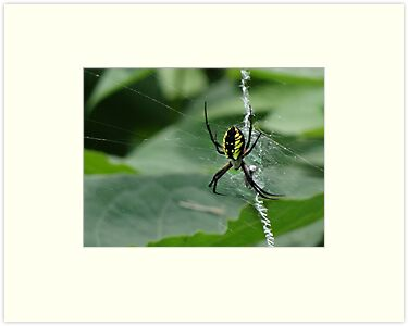 Web Weaver by vigor