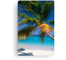 Virgin Island Palm Tree Canvas Print