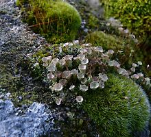 Tubular Lichen by Kat Simmons