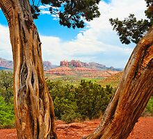 Sedona Pine by George Oze