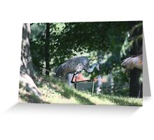 Sandhill Crane photographed in Oconomowoc Greeting Card