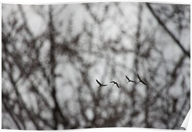 Sandhill Cranes in Whitefish Bay Wisconsin by Thomas Murphy