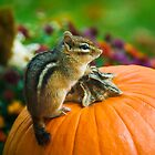 Chipmunk Sitting on Pumpkin by Timothy Borkowski