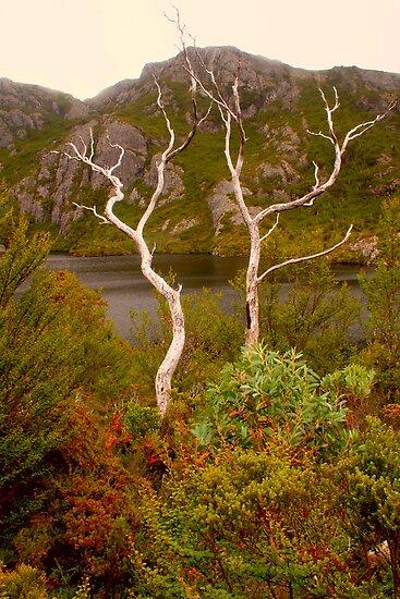 Skeletal trees on Crater Lake by Michael Matthews