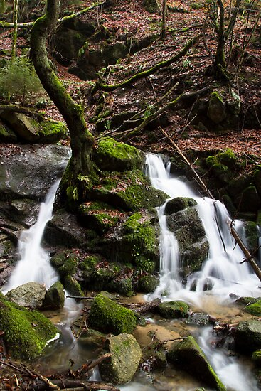 Forest Waterfall by Walter Quirtmair