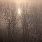 Trees in the mist by Karen  Betts