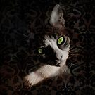 Cat Looking by silvianeto