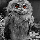 Baby European Eagle Owl by Lisa  Baker-Richardson