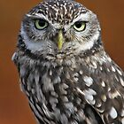 Little Owl by Gary Richardson