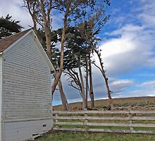 Old Schoolhouse at Pierce Ranch by Barbara Wyeth
