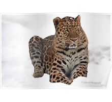 The Amur Leopard in his element 2 Poster