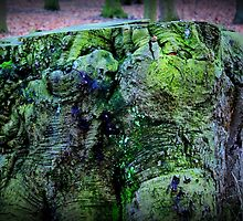 Green Stump by silentstead