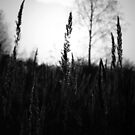 Grass in Gold by PMJCards