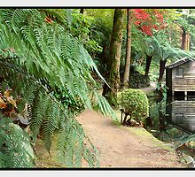A Secret Garden, Dandenong Ranges VIC by Chris Munn