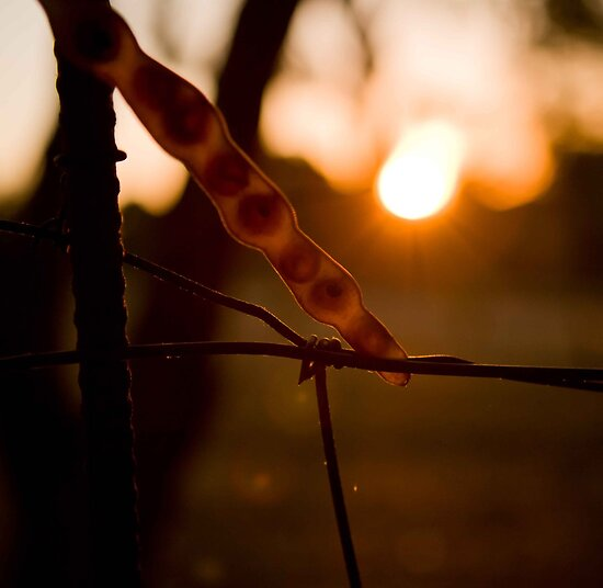 seed caught in the wire by White Owl