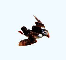 Puffin 1 by Chris Ayre