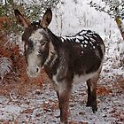 New Forest Donkey by Gary Richardson