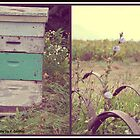 Honey Bees. by Wildflower77