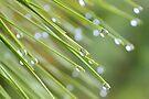 Droplets by ©Dawne M. Dunton
