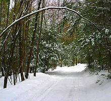 Snowy Lane by Gene Walls