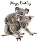A koala Happy Birthday 2L by Gerry Pearce