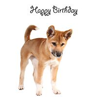 A dingo Happy Birthday 1L by Gerry Pearce